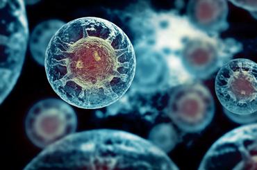 Dunkelfeld Mikroskopie